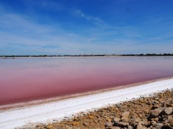 Roze Meer aigues mortes-2