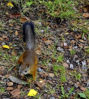Seurasaari helsinki eekhoorn
