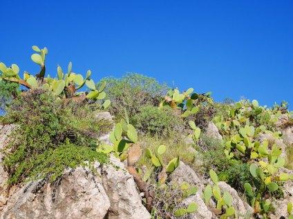 Strand sicilie cactussen spotten