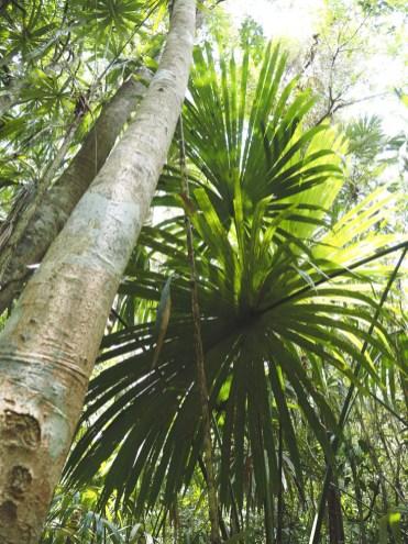 Tikal Guatemala jungle dieren