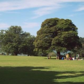 Park Sydney tips
