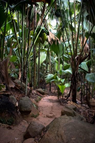 Vallee de mai pad door de jungle praslin seychellen