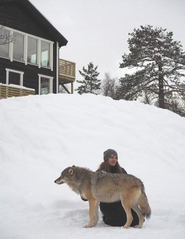 Polar park gids