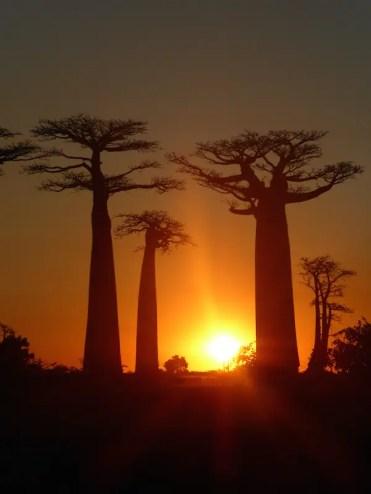baobab bomen in madagascar zonsondergang