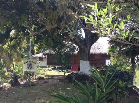 blenheim jamaica