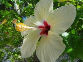 bloemen mexico