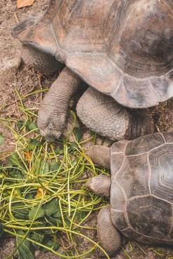 la digue turtles