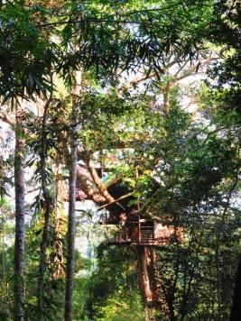 laos boomhut Gibbon Experience Iris Timmermans
