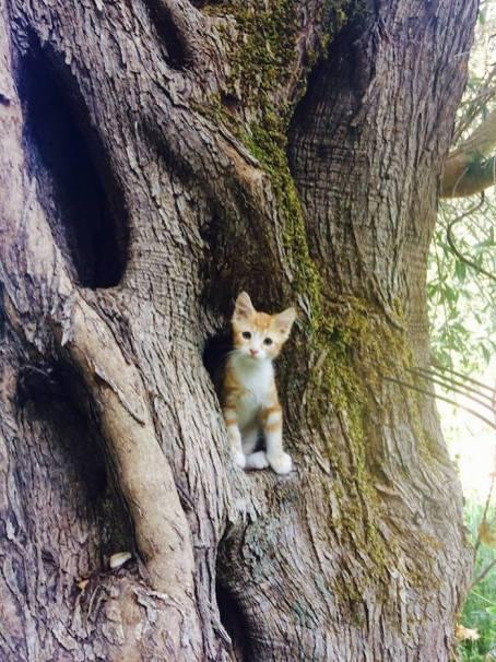 lefkas kitten boom eliza was here olivetto huisje