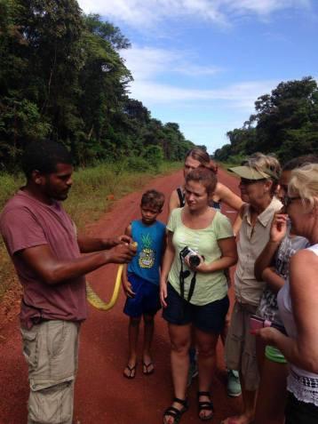 slang gevonden in jungle suriname tonen
