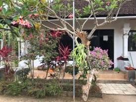 tuin putu's huis
