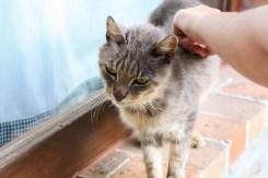 umbrie katten rondreis agriturismo