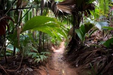 vallee de Mai jungle pad praslin seychellen