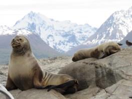 wildlife anne wereldreis maanden