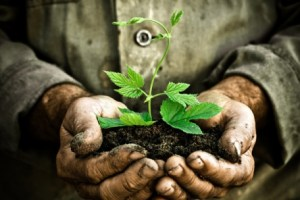 Old Gardeners hands