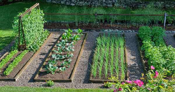 vegetable-gardening-dh
