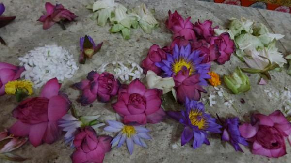 Wunderschöne Blüten liegen als Opfergaben vor Buddha.