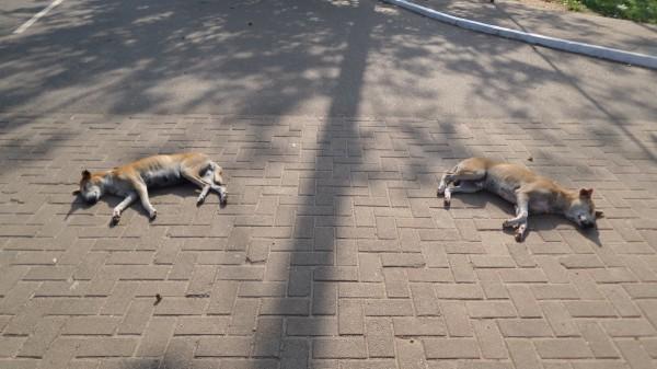 Für die Hunde ist unsere Foto-Session zum schlafen langweilig.