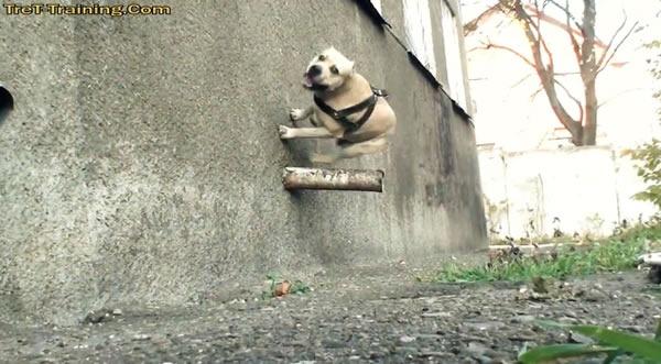 perros-parkour