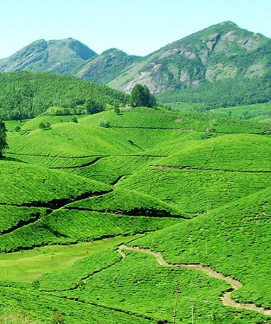 Munnar one of the best place to visit India