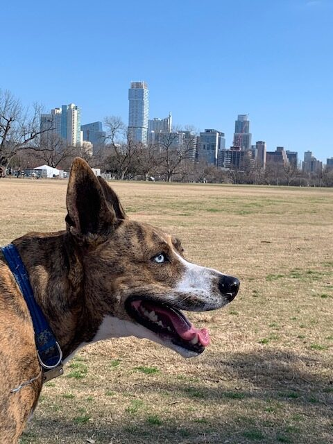Getting to Zilker with friends and pups!