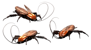 cockroaches at home
