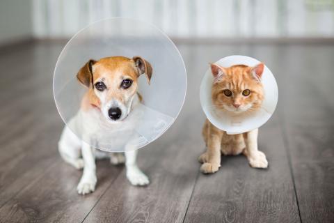 Collar isabelino para perros y gatos