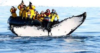 La découverte d'une baleine pendant une excursion...