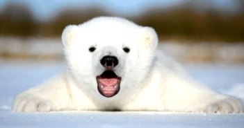 Top 10 des animaux à rencontrer lors d'une croisière