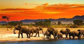 Croisière en Afrique du Sud : Top 5 des escales incontournables