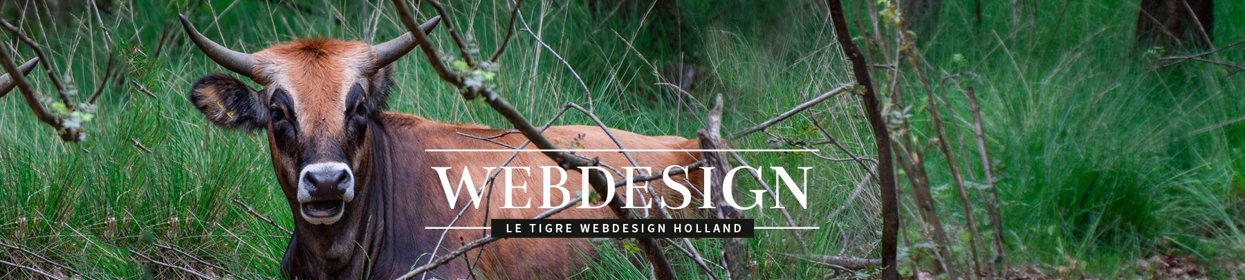 Contact LeTigre Webdesign Holland