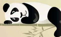 Watching Panda Grow In 25 Updates