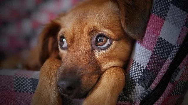 Laminate Flooring for Pets