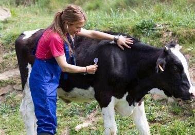 ¿Por qué estudiar veterinaria? Diferentes especializaciones y campos laborales