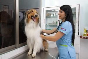 el consultorio veterinario