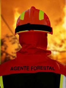 Pruebas a agente forestal o guarda forestal