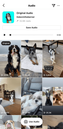 A page featuring reels audio and images of cats and dogs