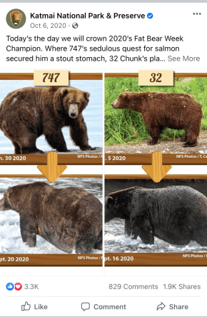 A post from Katmai National Park & Preserve pitting two bears against each other for the Fat Bear Week competition