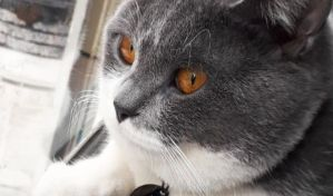 Kedimin kusmasına nasıl çözüm buldum?