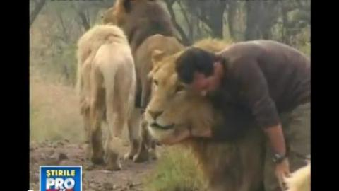 A Man And 38 Lions