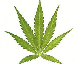 marijuana_opt