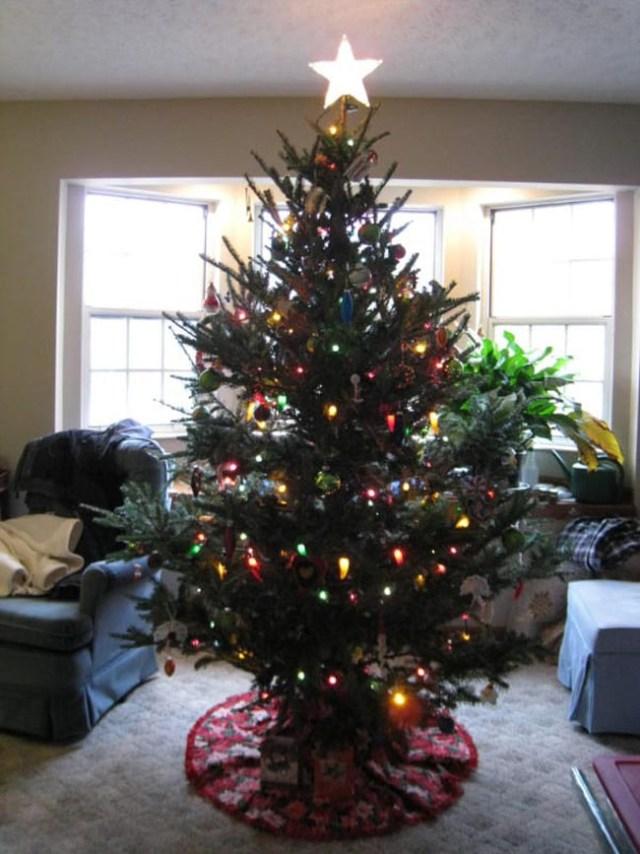 Nieodłącznym atrybutem świąt  jest świąteczne drzewko czyli popularnie zwana choinka, mało kto jednak wie że mogą się w niej zalec insekty, np. mszyce