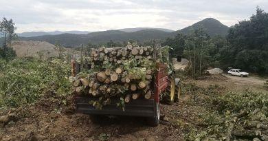 """Жители од Демир Хисар вршеле утовар на огревно дрво без документи на товарно возило """"Мерцедес"""""""