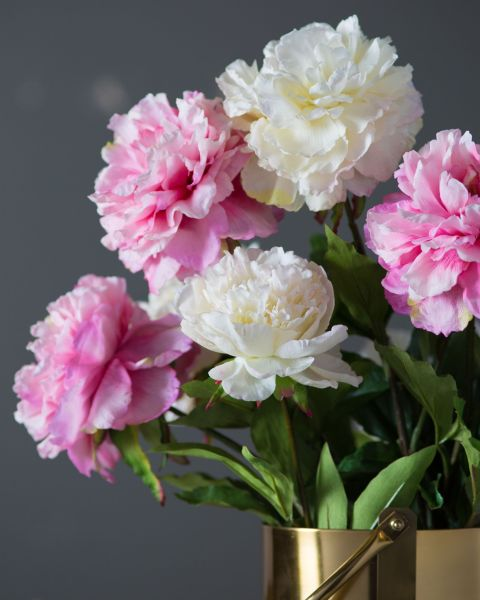 images for flowers peony