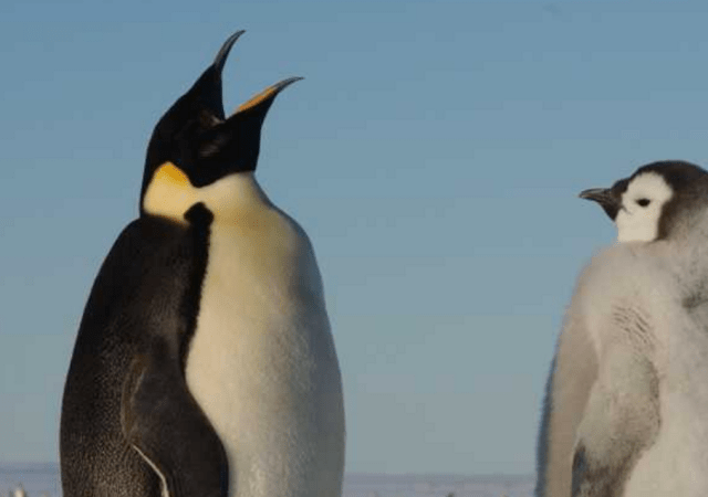 Google Talks Coming Penguin Update