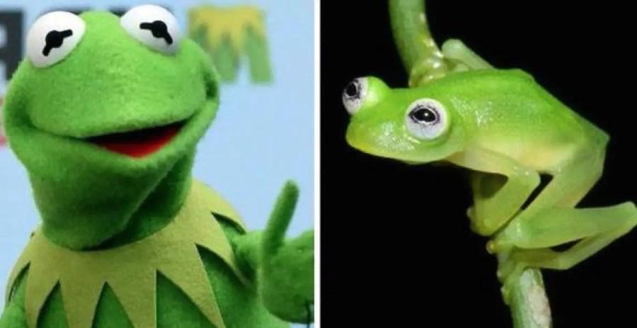 Kermit, Frosch, Muppets, Glasfrosch