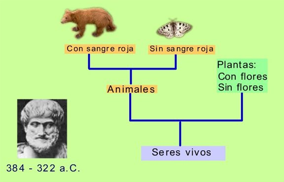 Clasificación de los organismos vivos | Webscolar