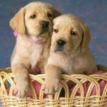 ¿Se puede incluir una cobertura para animales en el seguro de hogar?