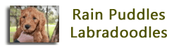 logo for rain puddles website