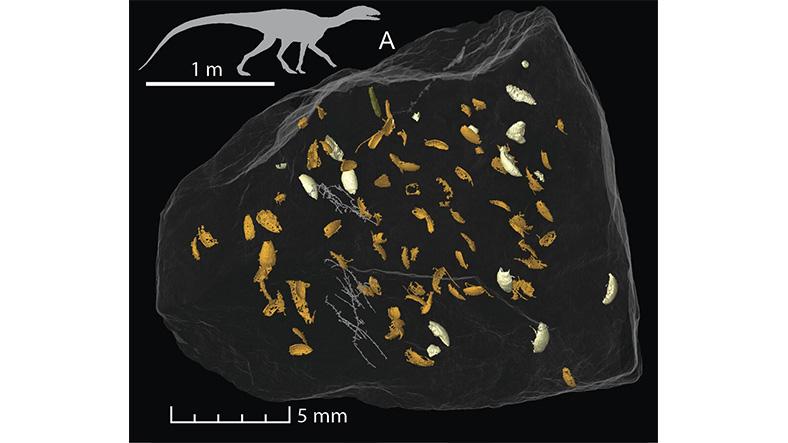 Bulunan böcek fosilleri